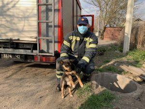 Минулої доби на Кіровоградщини пожежники врятували трьох тварин (ФОТО)