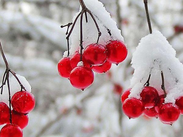 Погода у Кропивницькому сьогодні, 1 січня