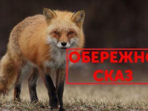 На Кіровоградщині на жінку напала скажена лисиця