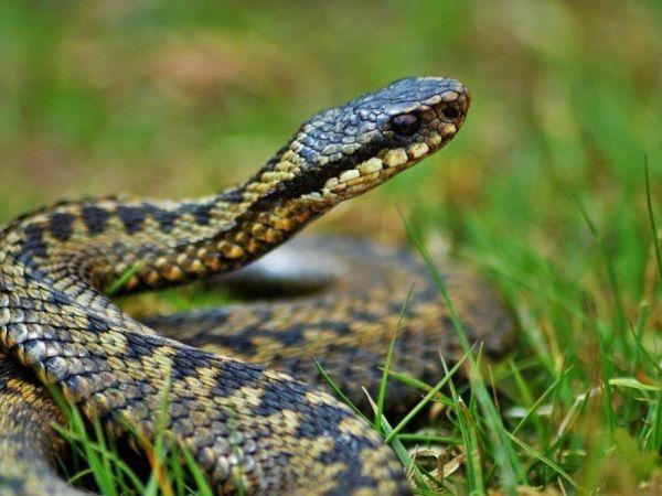 Кропивницький: Змія налякала сім'ю з приватного сектора