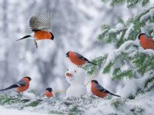 Погода у Кропивницькому 12 січня