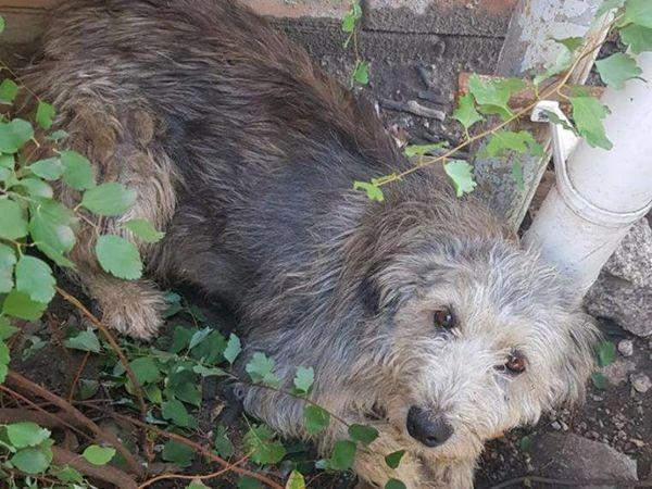 У Кропивницькому водій відмовився надати допомогу собаці, на якого він наїхав автівкою