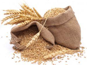 Скільки зерна зібрали аграрники на нивах області?