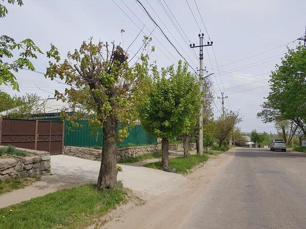 Обрізати чи ні? Що думають експерти та депутати стосовно «омолоджувальної» обрізки дерев Кропивницького?