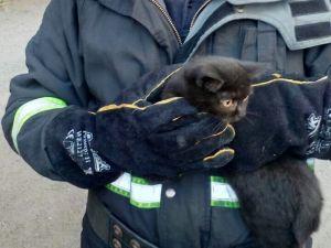 У Кропивницькому рятувальники зняли кошеня з небезпечної висоти