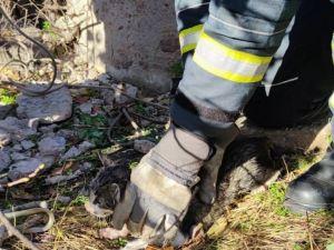 Кіровоградщина: В Олександрії кіт упав у криницю