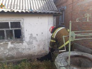 Кіровоградщина: У Новоукраїнці собака потрапив до колодязя з дощовою водою