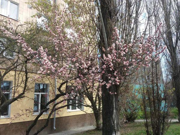 Погода у Кропивницькому 15 квітня