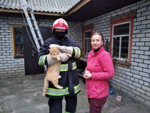 Кіровоградщина: У Новгородці кіт застряг на даху