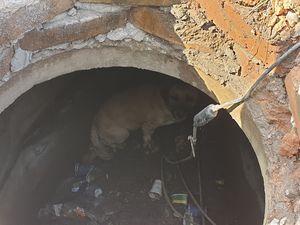 У Кропивницькому рятувальники витягли собаку з каналізаційного люку