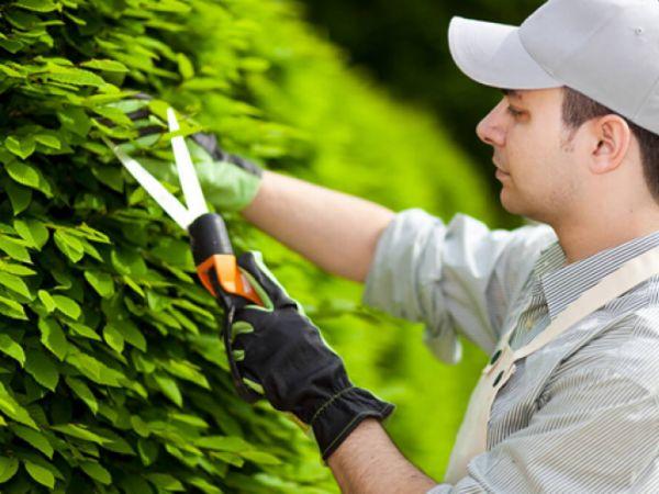 Безробітних Кіровоградщини запрошують безкоштовно стати озеленювачами