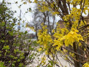 Весна у Кропивницькому (ФОТОРЕПОРТАЖ)