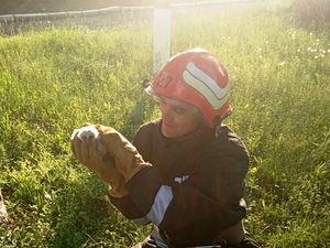 Новгородківський район: Пожежники врятували совенят, які випали з гнізда