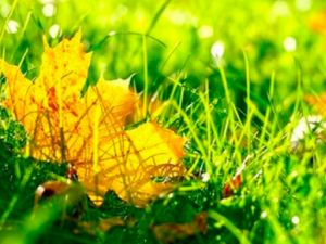 Погода у Кропивницькому 18 жовтня