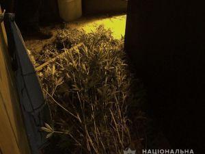 Кіровоградщина: У жителя Олександрії поліцейські знайшли зброю та наркотичні засоби
