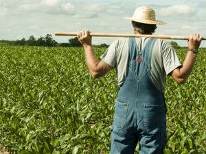 На Кіровоградщині переважає «сільське» безробіття