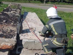 На Знам'янщині цуцик застряг під залізобетонними плитами