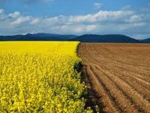 Прокуратура попередила незаконне привласнення земель вартістю два мільйони