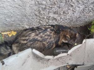 До приватного будинку у Кропивницькому забіг єнотоподібний собака