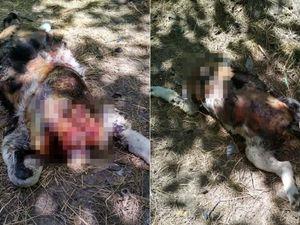 Жахіття у Кропивницькому продовжуються: на Полтавській знайшли вбитих собак (ФОТО)