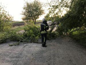Рятувальники прибирають аварійні дерева та гілки