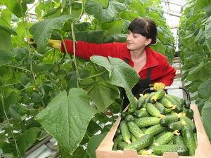 Професія для аграрного регіону: є можливість безкоштовно навчитися овочівництву