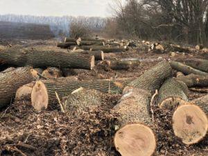 Незаконна порубка дерев у Кропивницькому районі на понад 200 тис грн