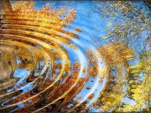 """Кропивницькі гімназисти зустрічають осінь віршами.  """"Жовтогарячий листопад..."""" (ВІДЕО)"""