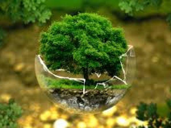 В Україні довкіллю протягом 2020 року нанесено два мільярди гривень збитків