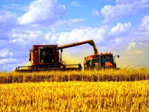 Чому на Кіровоградщині не всі фермери розпочали жнивну кампанію?
