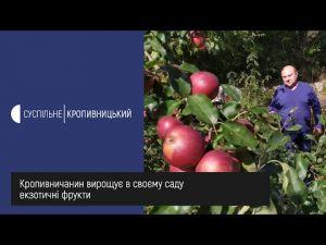 Кропивничанин вирощує у своєму саду екзотичні культури (ВІДЕО)