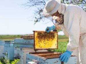 Кіровоградщина: В Устинівці колишній військовий зайнявся бджолярством