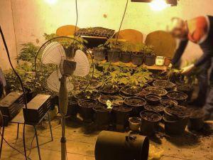 Мешканець Кіровоградщини вирощував вдома коноплю