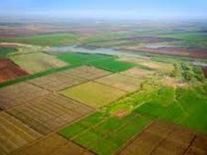 Скільки землі на Кіровоградщині продали органи місцевого самоврядування?