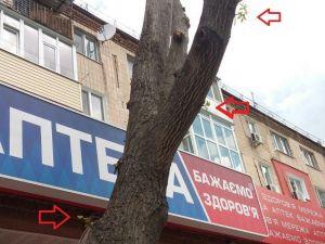 У Кропивницькому фармацевти методично знищують дерево (ФОТО)