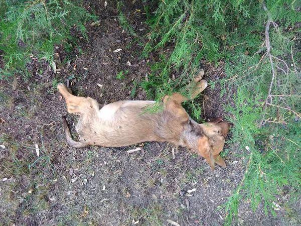Вбивства тварин у Кропивницькому не припиняються (ВІДЕО)