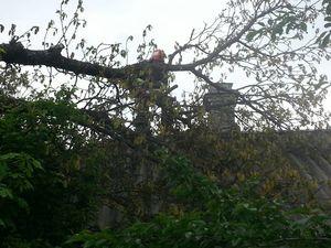 Кропивницький: На Балашовці після вітру на будинок впала гілка
