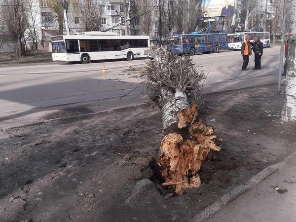 По вулиці Полтавська на дорогу впало дерево. Рух тролейбусів зупинено (ФОТО)
