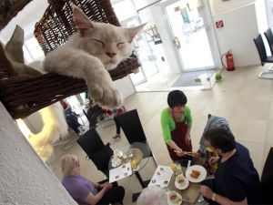 У кафе можуть з'явитися куточки для тварин
