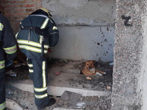 Кіровоградщина: В райцентрі у підвалі застряг рудий собака