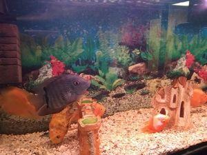 Кропивничан запрошують на київську виставку риб. Залишились лічені дні (ФОТО)