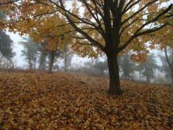 Погода у Кропивницькому 14 листопада