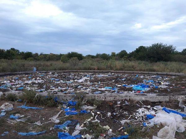В районі Кущівки знайшли величезне звалище відходів з бойні  - кишки, голови, кістки великої рогатої худоби (ФОТО, ВІДЕО)