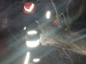 На Миколаївці рятувальники розпиляли і прибрали аварійну гілку