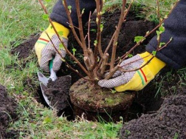 Скільки у Кропивницькому висадять молодих дерев? (ВІДЕО)