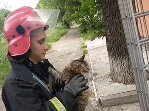 У Кропивницькому бійці ДСНС України визволили кота та собаку із безвиході