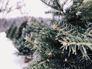 Особенности искусственных елок