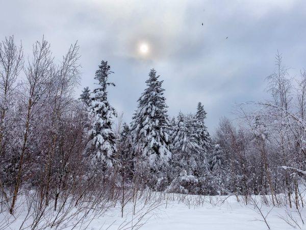 Погода у Кропивницькому 19 лютого