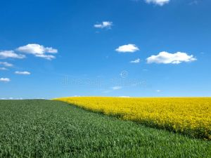 На Кіровоградщині розпочалась посівна кампанія