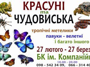"""У Кропивницькому можна відвідати дивовижну виставку """"КРАСУНІ та ЧУДОВИСЬКА"""""""